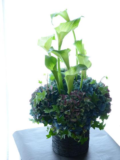 生花アレンジメント紫陽花